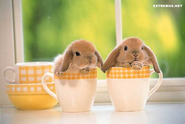 Cleaning-Bunnies