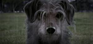 geekstra_dogwick
